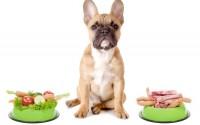 Cachorro com potes de comida