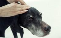 cachorro massageado