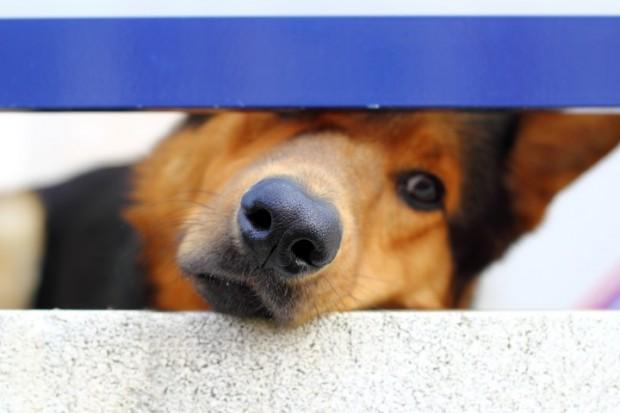 cão maltratado