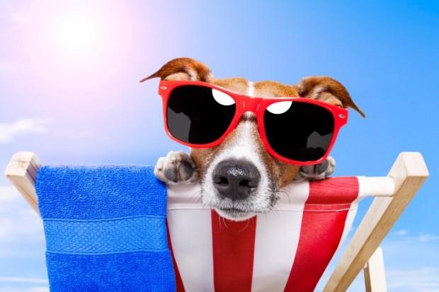 cão no sol