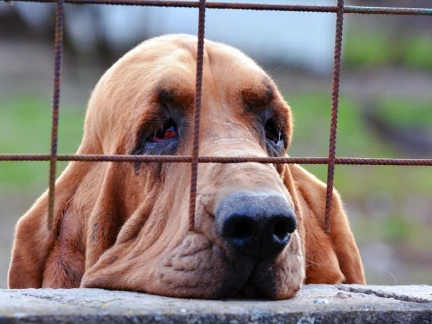 depressão em cachorro