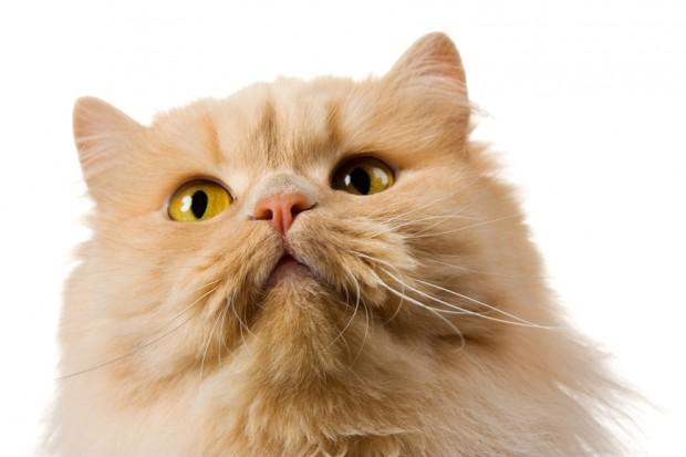 gatos transmitem doenças