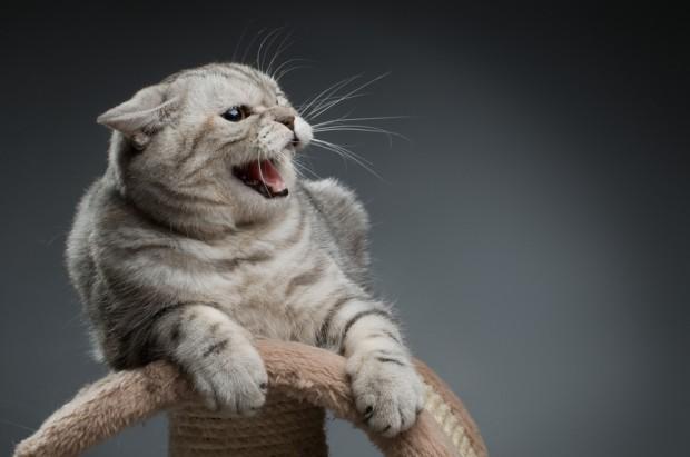 Resultado de imagem para gato com raiva