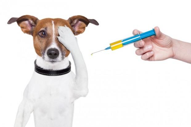 injeção no olho canino