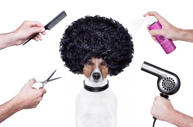 Full Grooming Kit For Dogs