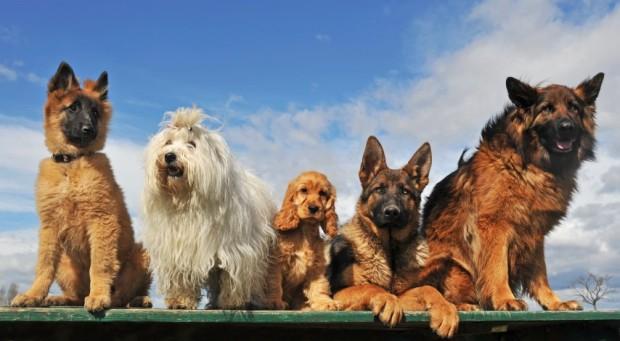 nomes de cachorro