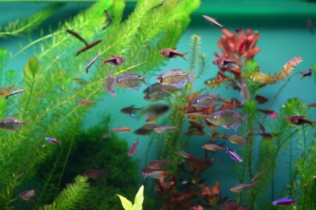 Como montar um aqu rio dicas para criar peixes for Peces para criar