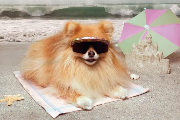 protetor solar para cães