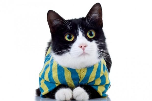 roupa para gato