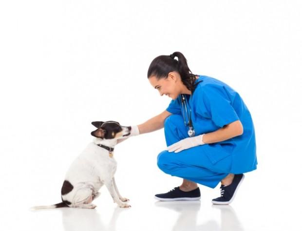 Resultado de imagem para veterinario